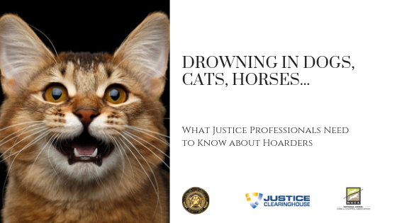 Drowning in Dogs, Cats, Horses…