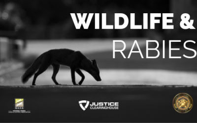 Wildlife and Rabies